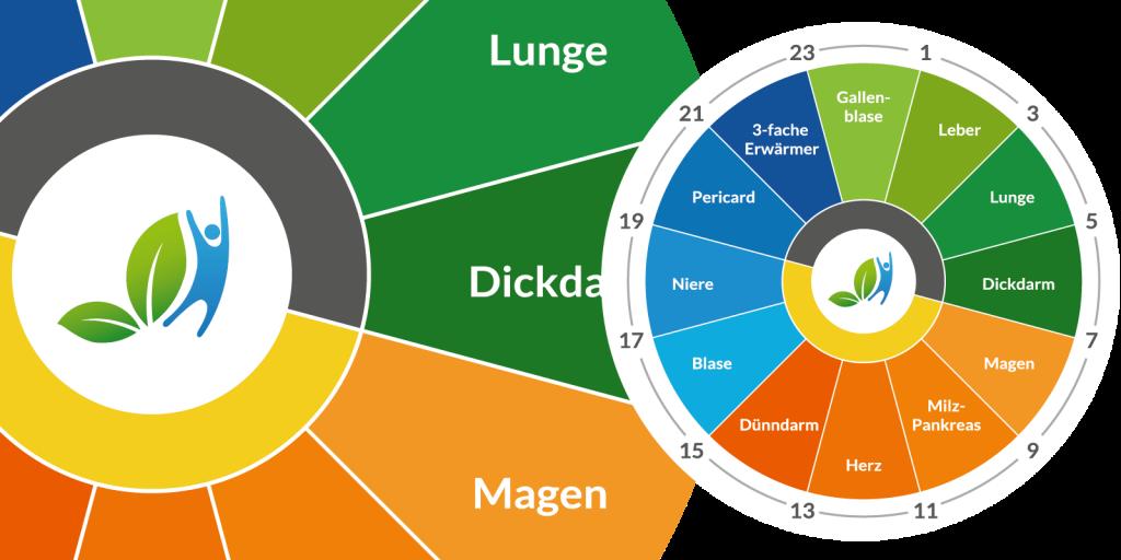 Infografik TCM-Organuhr im Design von go4health